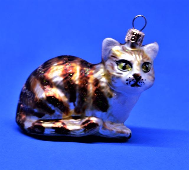Katze Tiger braun