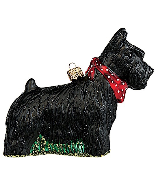 Scottish Terrier Hund